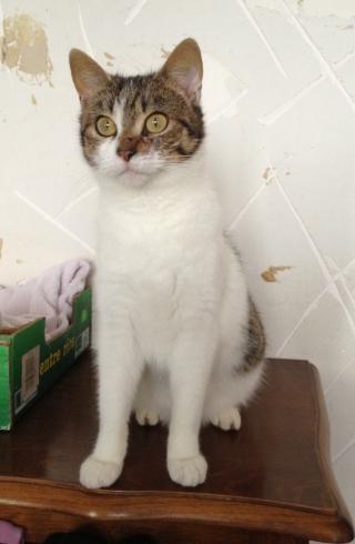 Cherche FA proche Redon pour plusieurs chats Img_0631-3aa6ff2