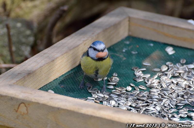pour le plaisir Dpp_-oiseaux--0005-3d87ba1