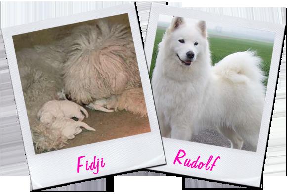 Blog de Winnifred Dogs-3d4374b